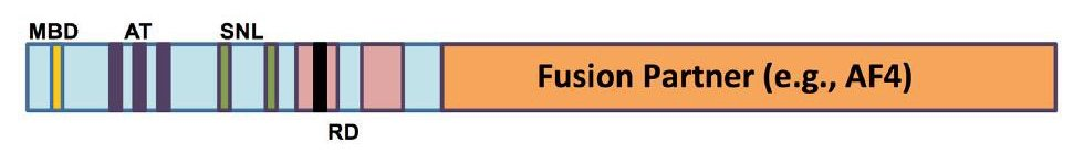 Fusion Partner (e.g., AF4)