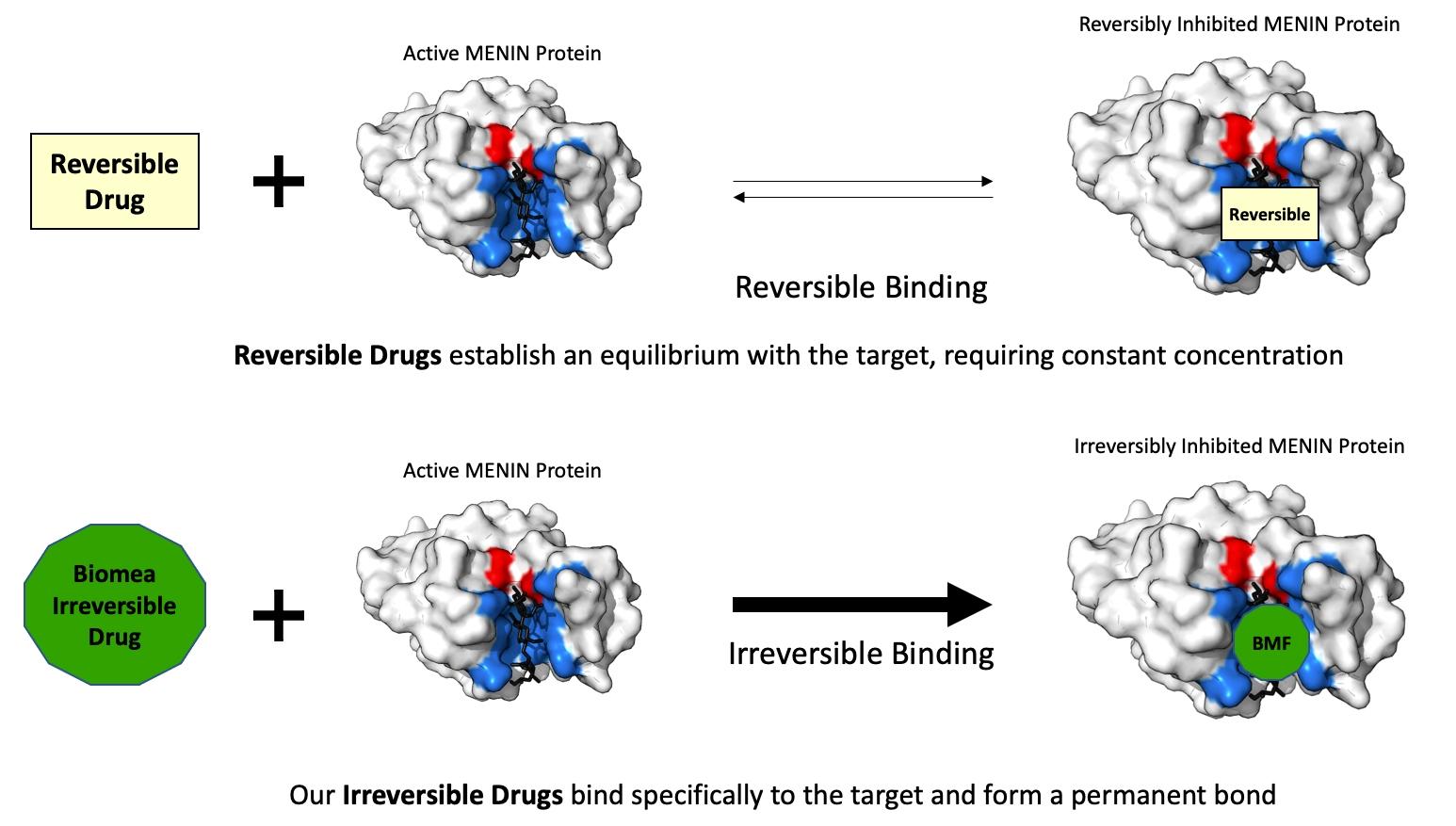 Biomea Fusion Irreversible Drub