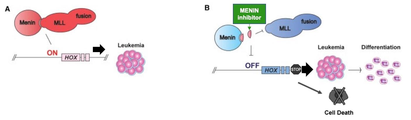 Inhibiting Oncogenic Signaling