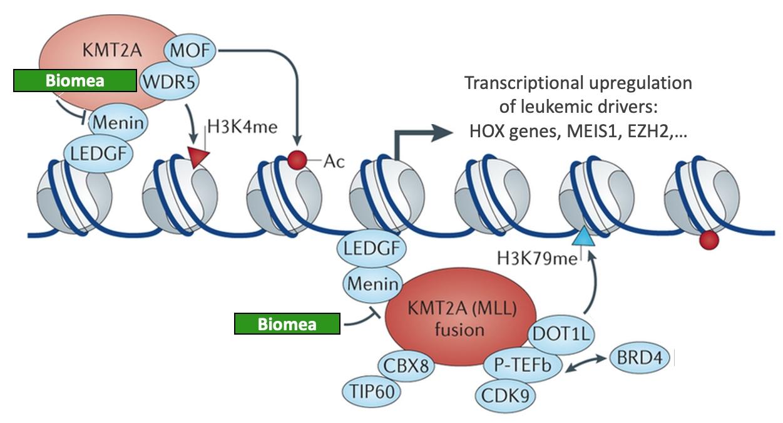 Transcriptional Up-regulation